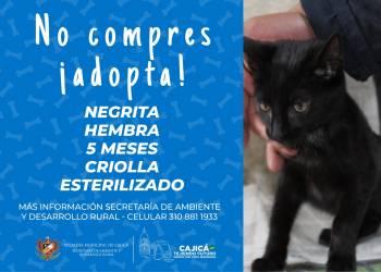 adopta06