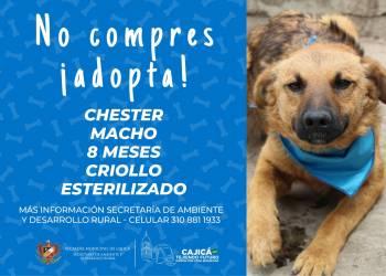 adopta10