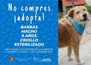 adopta12